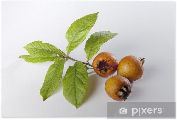 Plakát Mišpule listy - Ovoce
