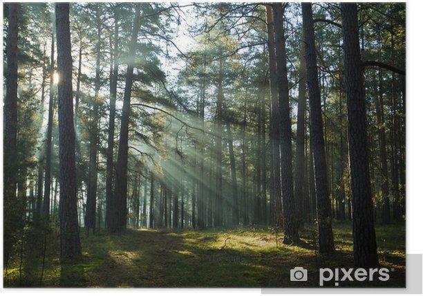 Plakat Misty stary mglisty las na wschód słońca - Pory roku