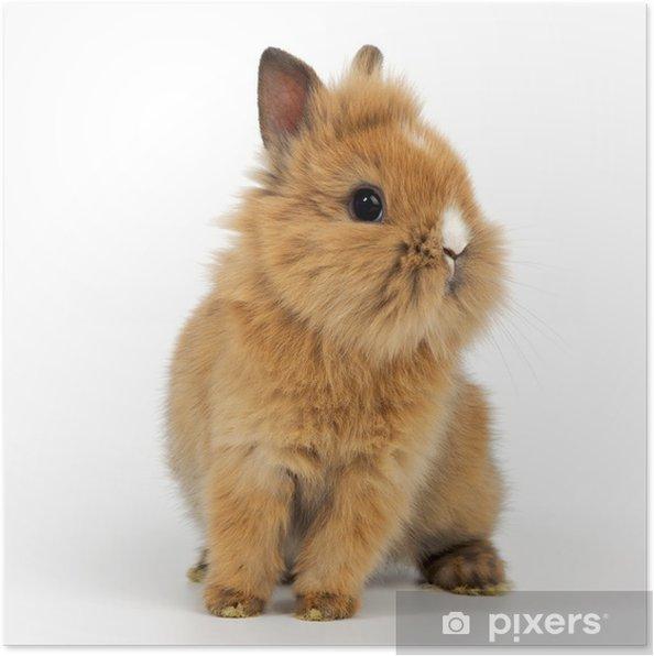 Plakat Młoda Rabbit - Króliki