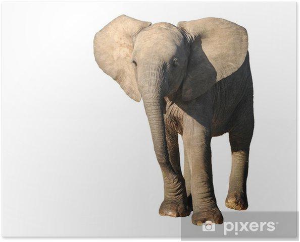 Plakat Młody słoń - Ssaki