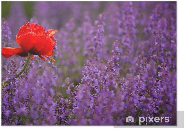 Plakat Mohn w violett - Dom i ogród