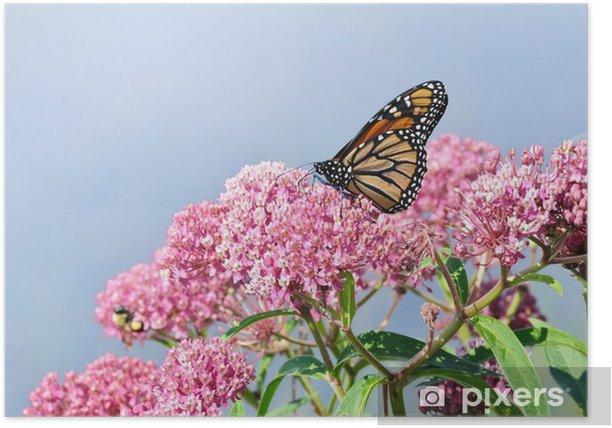Plakat Monarch Butterfly na bagnach Milkweed Dziki kwiat - Inne Inne