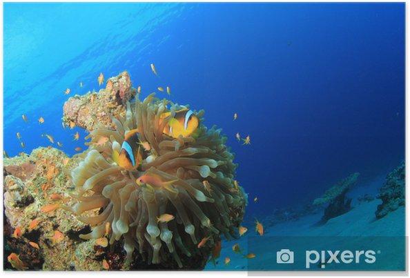 Plakat Morze Czerwone Anemonefish w Bubble Anemone - Zwierzęta żyjące pod wodą