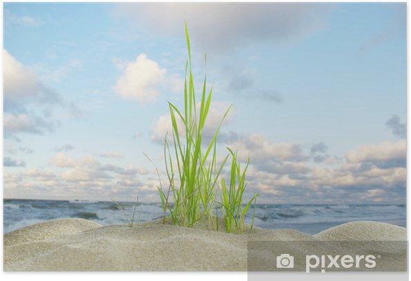 Plakat Morze, wydmy i trawy - Rośliny