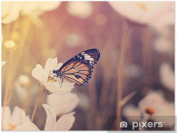 Plakat Motyl na białym polu kwiaty kosmosu - Zwierzęta