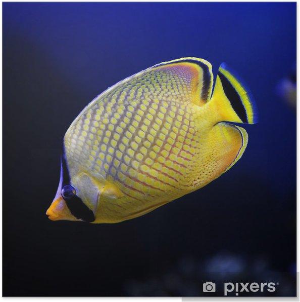 Plakát Mřížkovanými motýl, tombola `s (žlutá) Butterfly - Vodní a mořský život