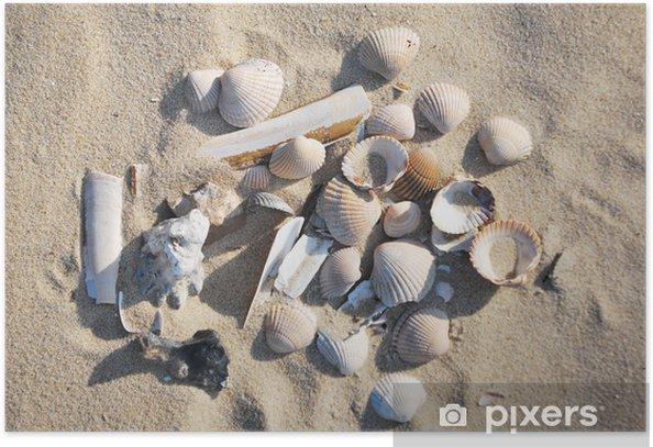 Plakát Muschel - Vodní a mořský život