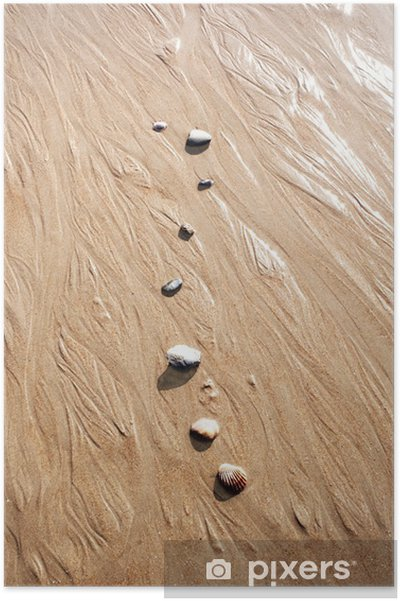 Plakat Muszle na plaży - Woda