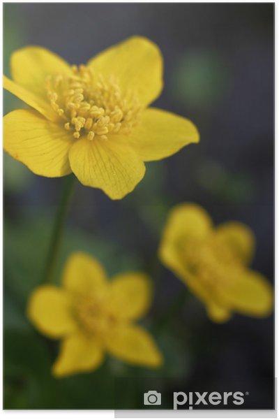 Plakat Nagietek mokradła - Kwiaty