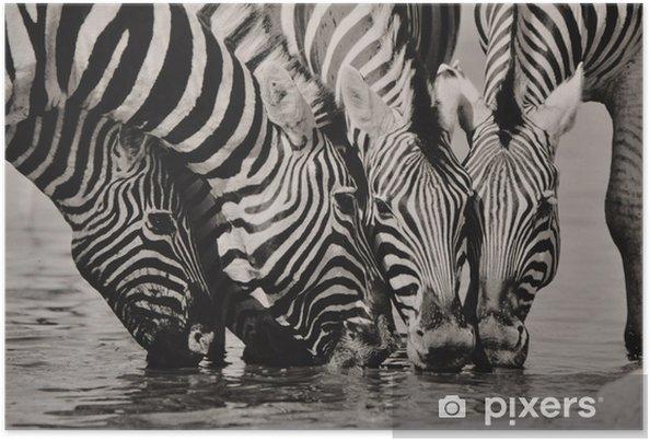 Plakat Namibia Zebra SW - Tematy