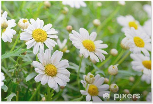 Plakat Naure mocy - Kwiaty