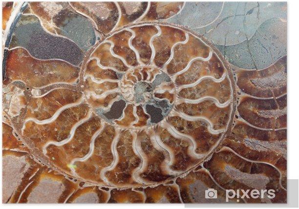 Plakat Nautilus powłoki - Zwierzęta żyjące pod wodą