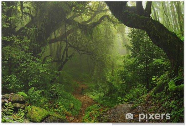 Plakat Nepalski las tropikalny - Brazylia