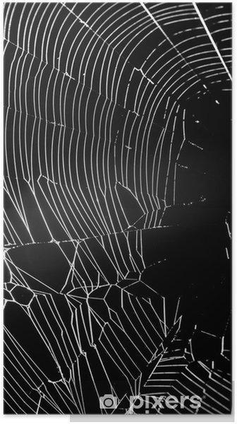 Plakat Net Biały pająk samodzielnie na czarnym tle. - Tła