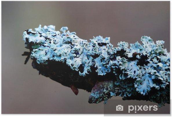 Plakat Niebieski porostów w lesie - Drzewa