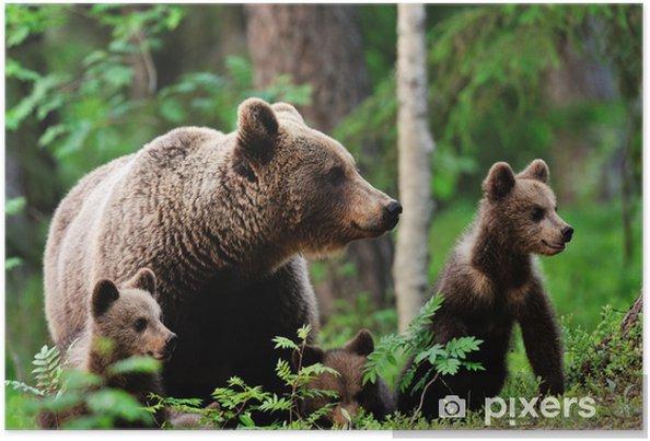 Plakat Niedźwiedź brunatny z młodymi w lesie - Tematy