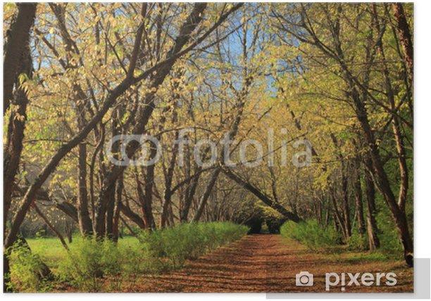 Plakat Niesamowity widok na las jesienią - Wakacje