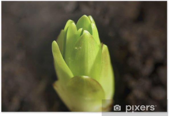 Plakat Nowa Lily - Rośliny