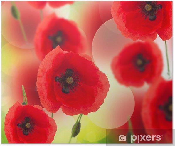Plakát Oblast mák květiny - Témata