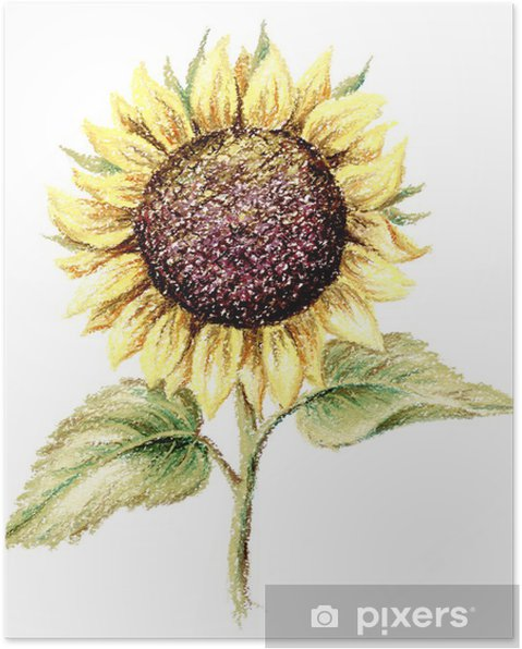 Plakat Obraz, pastel, słonecznik - Rośliny