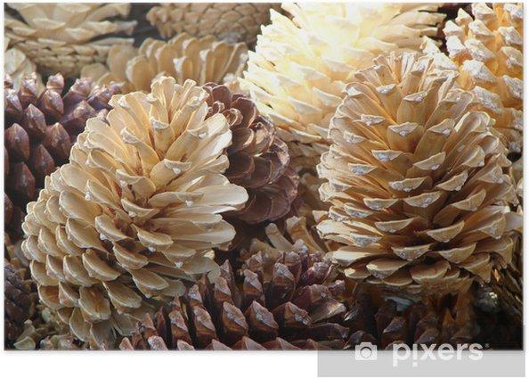 Plakat Obraz z szyszek - Drzewa