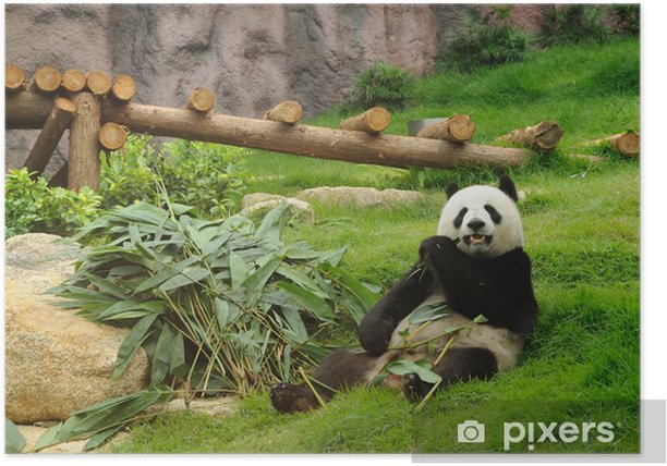 Plakát Obří panda - Témata