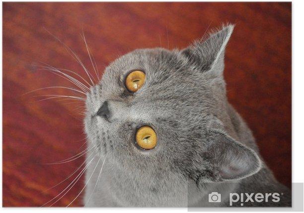 Plakat Oczy kota - Inne uczucia