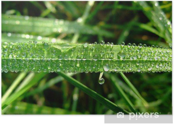 Plakat Odblaskowe krople wody - Rośliny