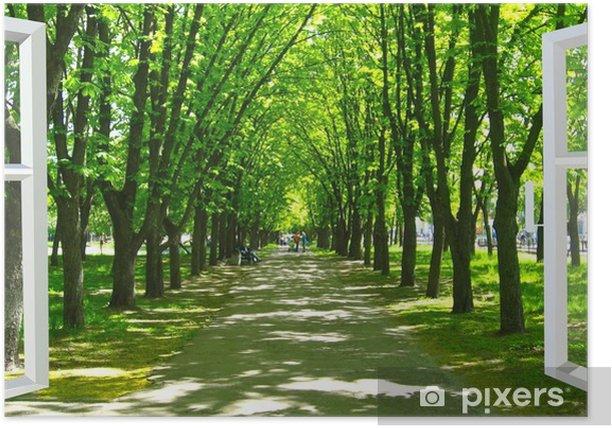 Plakat Okno otwarte na piękny park z wieloma zielonymi drzewami - Tematy