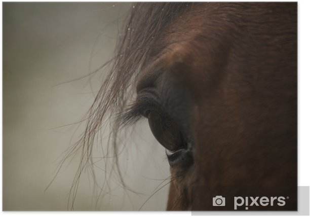 Plakat Oko konia - Sporty indywidualne