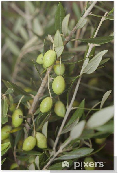 Plakat Oliwki - Rośliny