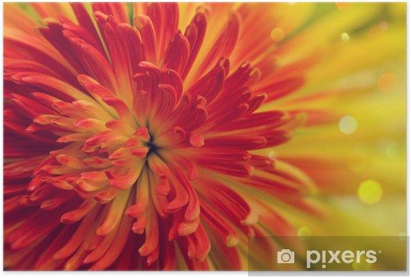 Plakát Oranžovo-červený květ - Květiny