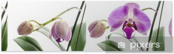 Plakat Orchid kwiat wzrostu etapów - Kwiaty