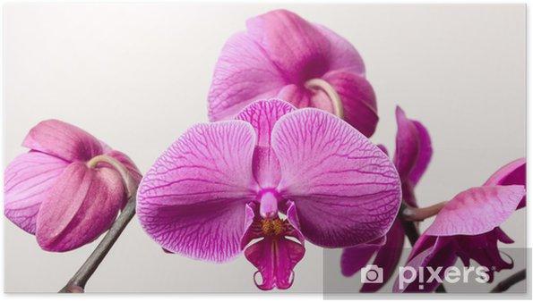 Plakat Orchid kwiaty - Kwiaty