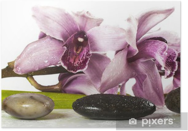 Plakat Orchidea i kamienie na bia? - Style