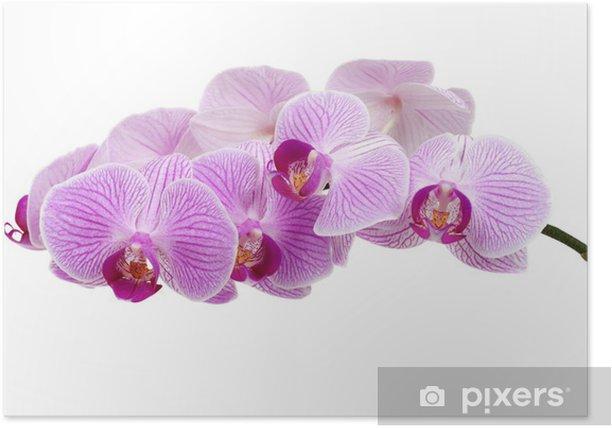 Plakat Orchidea - Uroda i pielęgnacja ciała