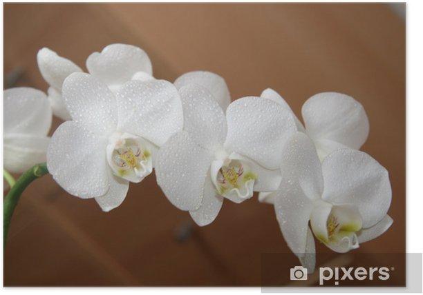Plakat Orchidea - Kwiaty