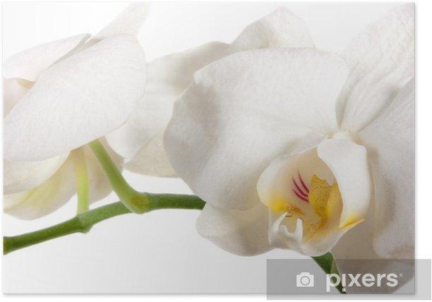Plakát Orchidee - Štěstí