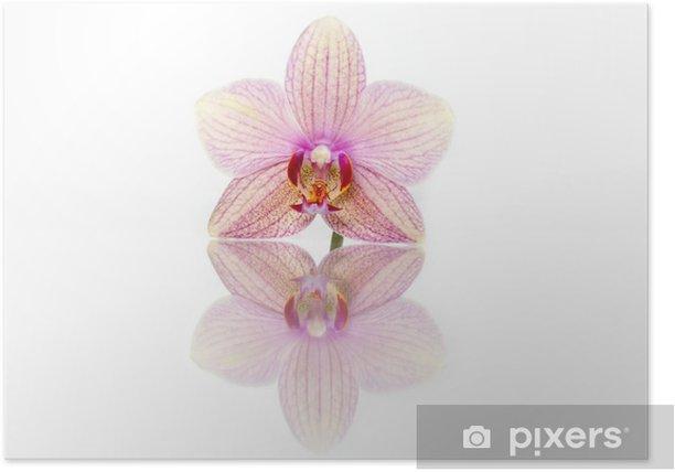 Plakát Orchidej květina - Květiny