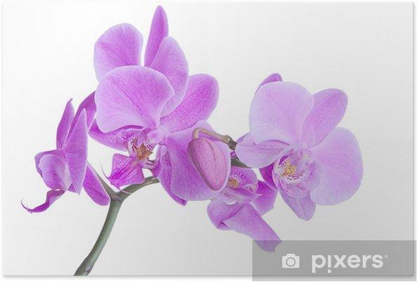 Plakát Orchideje - Životní styl, péče o tělo a krása