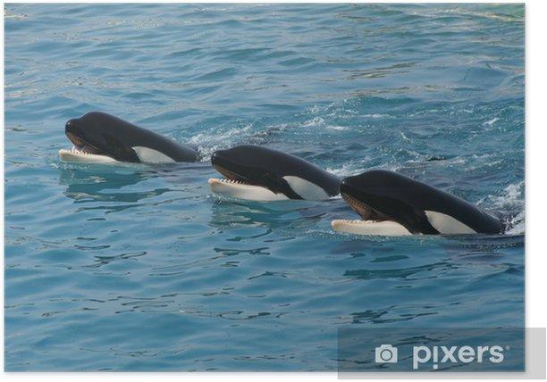 Plakat Orques - Zwierzęta żyjące pod wodą