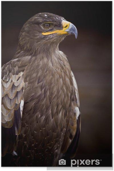 Plakat Orzeł ptak drapieżny dziób pióro króla dumnej głowy wygląd biustu - Tematy