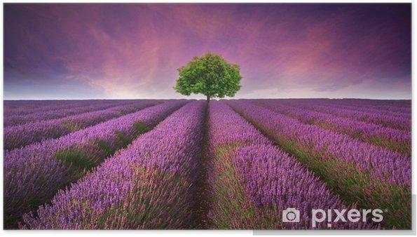 Plakat Oszałamiający krajobraz lato lawendowego pola z jednego drzewa słońca -