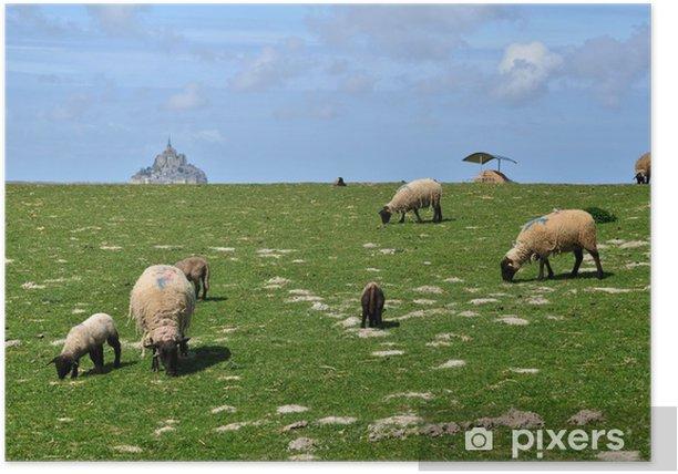 Plakat Owce na łące niedaleko Mont Saint Michel w Normandii - Rolnictwo