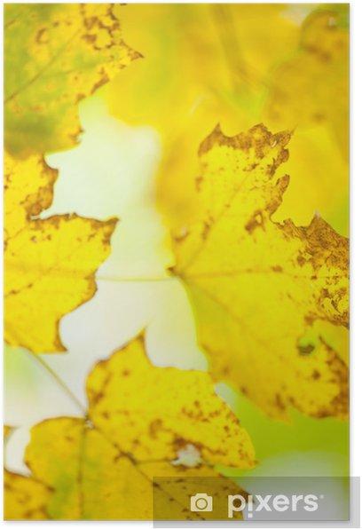 Plakát Padání listí - Roční období