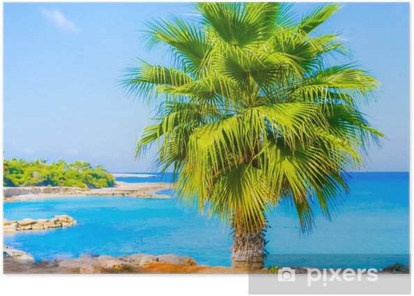Plakát Palm sea shore - Stromy