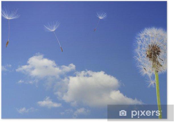 Plakát Pampeliška semena létání - Rostliny