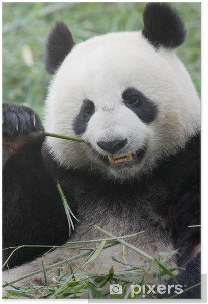 Plakat Panda - Tematy