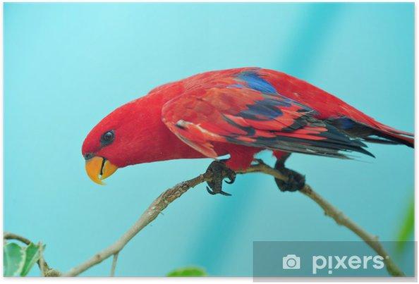 Plakát Papoušci zoo - Témata