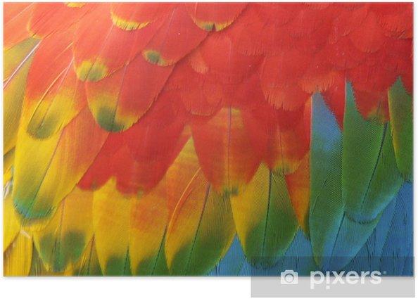 Plakat Papuga - Ptaki